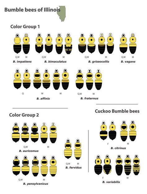 Identify bees pictures