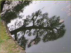 16 dragon branch in water