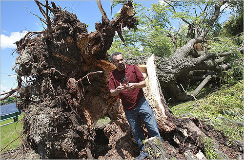 David Gouverneur took a closer look at the tree and was surprised to see rotten areas at the base.