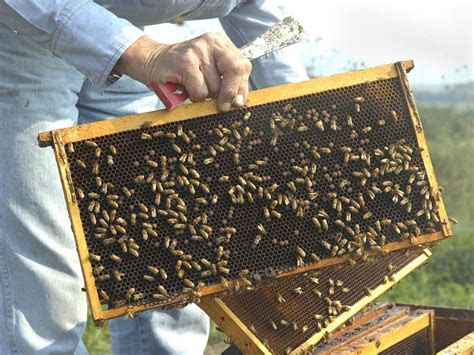 Insecticide to blame?   News   dailyitem.com