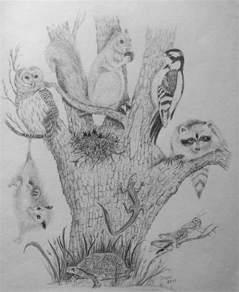nature pencil drawing tree  life    dixonartscrafts