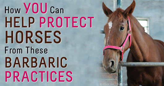 Horse Protection Act: New Ways To Protect America's Horses