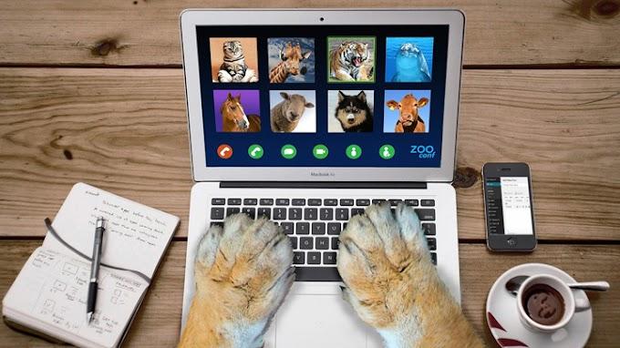 Consejos para evitar las descargas eléctricas de las mascotas en casa