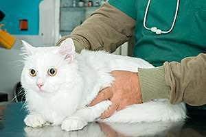 2014 12 09 produtos veterinarios