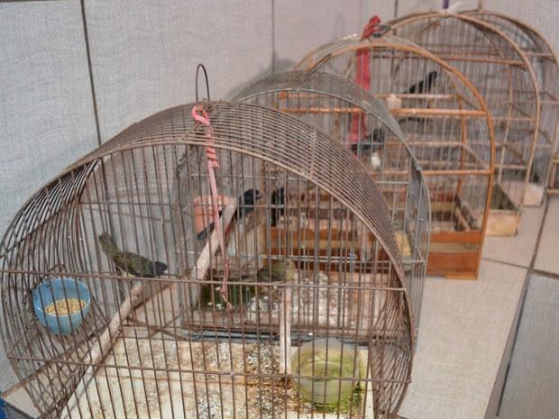 Aves foram resgatadas do cativeiro pela Polícia Ambiental de Cacoal (Foto: Magda Oliveira/G1)