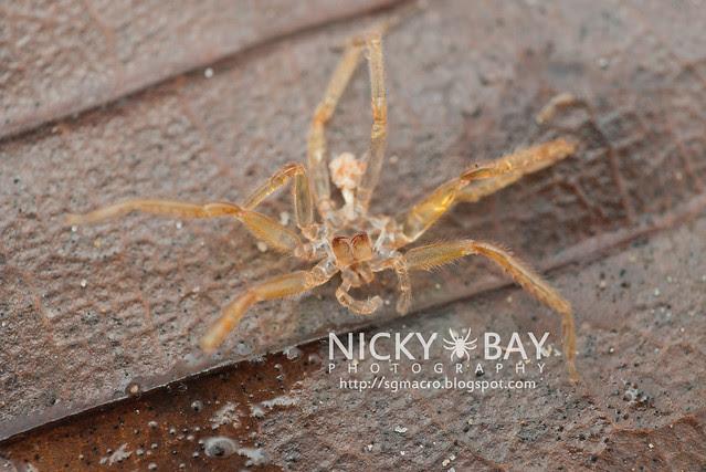 Spider Molt - DSC_4787
