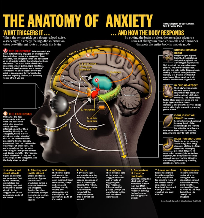 The Anatomy Of Anxiety and How the Body Responds