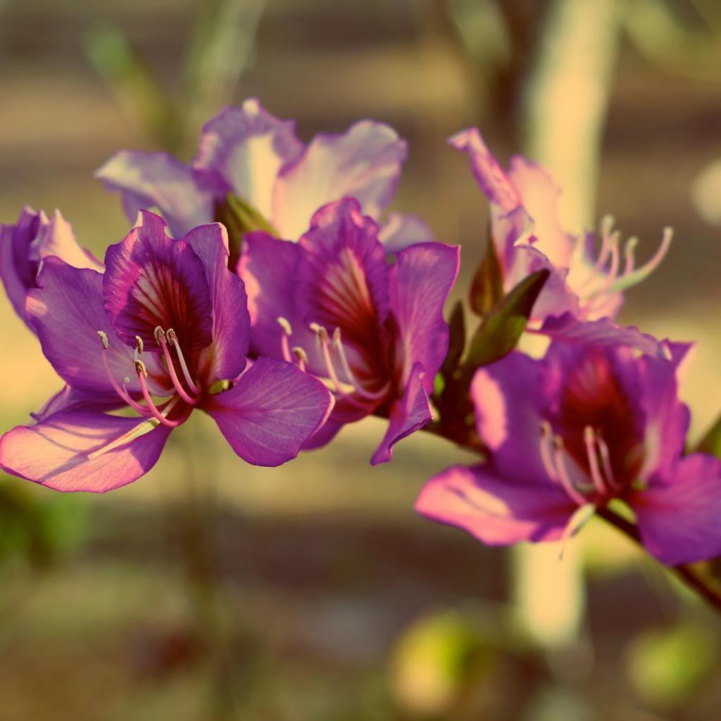 photo flowerslil.jpg