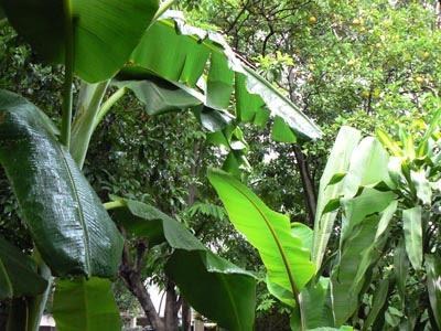 dernière pluie tropicale à Valles.jpg