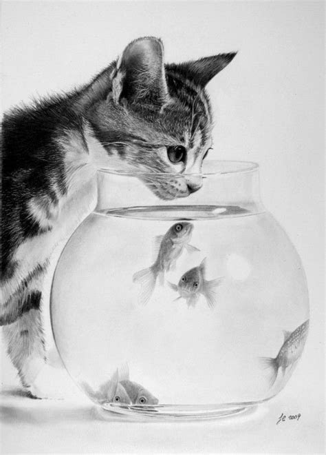 precisely pencil drawn animals coloring cats  search
