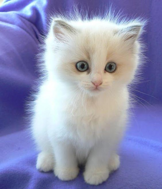 Top 20 Cutest Kittens