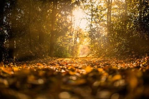 Outono na alma!