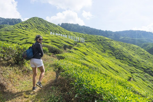 What to do in Cameron Highlands - A One Day Guide - Backpackingman