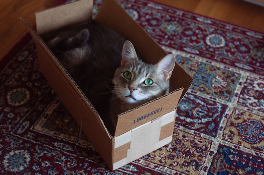 When your cat finds the perfect sized box...