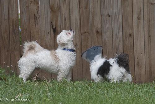 DogBlogWE101512-26-5
