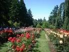 kebun mawar