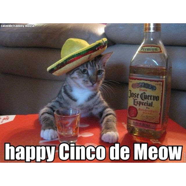 Happy Cinco de Mayo funny