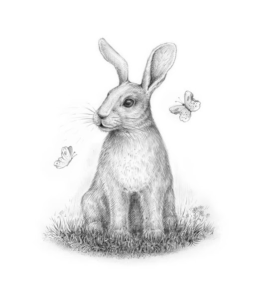How to Draw a Rabbit Step by Step – New Tutorial on Envato Tuts+