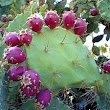 Learn the Wonders of Raw Nopal Cactus Juice