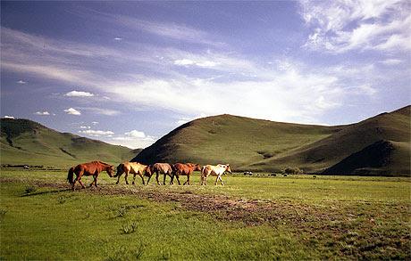 Cosplay Forum Voir Le Sujet Salon Sur La Mongolie 28