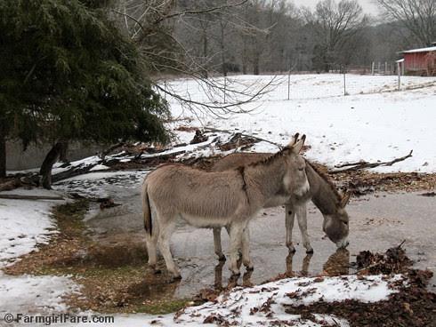 The Daily Donkey 56