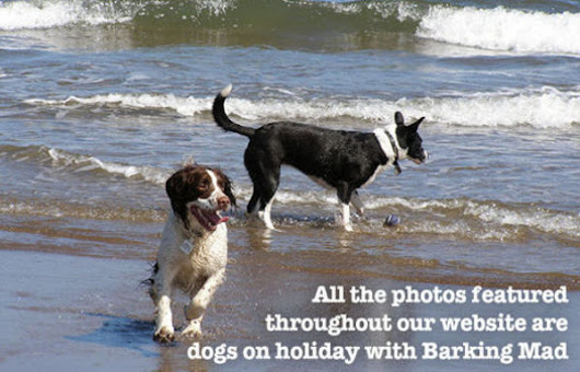 Barking Mad - Nantwich & South Cheshire in Nantwich, Cheshire | Dog Boarding & Pet Sitting
