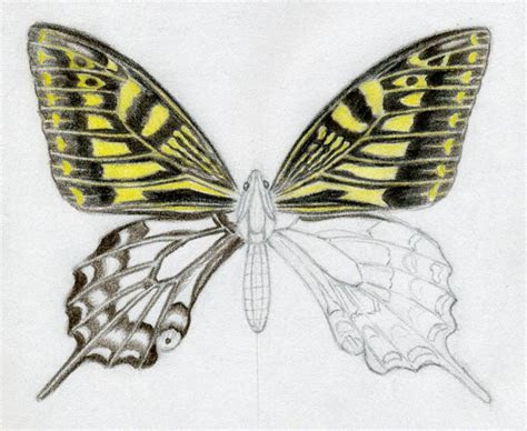 draw  butterfly surprisingly easy