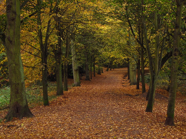 The Lime Avenue