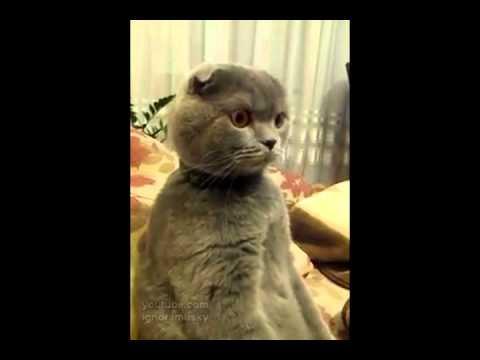 video de un gato mirando en la televisión star wars