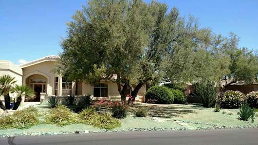 Weed Control In Scottsdale, Fountain Hills & McDowell Mountain Ranch