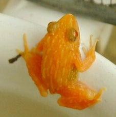 オレンジ色の動物と言えば ロンのひとりごと