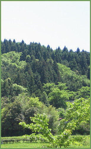 30 green forest