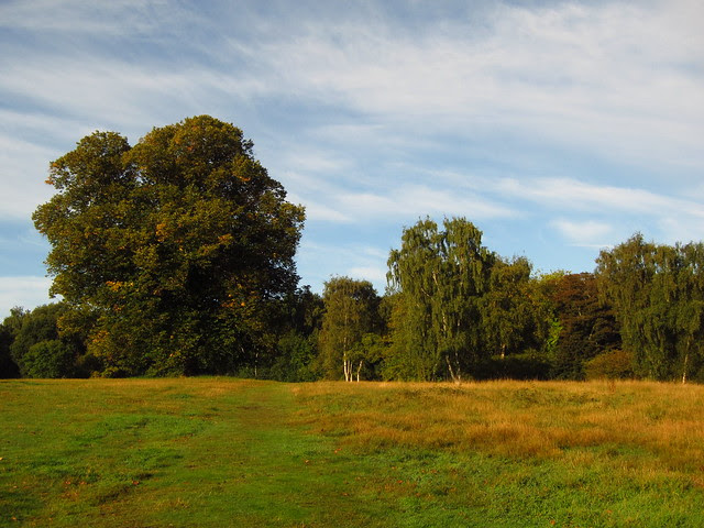 The West Meadow