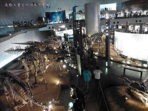 恐竜博物館05.JPG