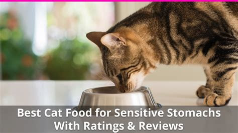 cat food  sensitive stomachs wet  dry brand reviews