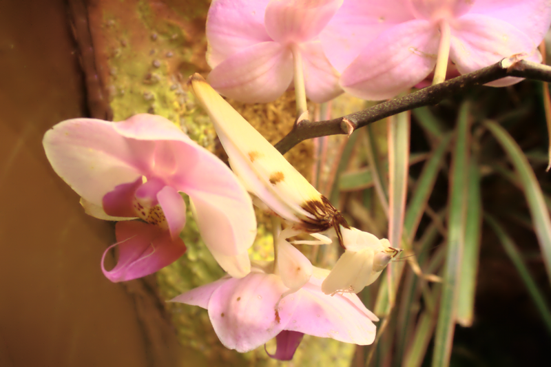 File:Insect camouflage PP08338.png