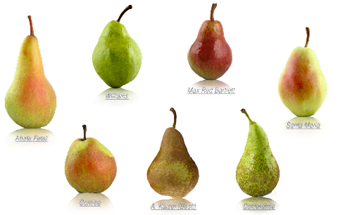 Comice Conference And Williams Are Varieties Of Which Fruit