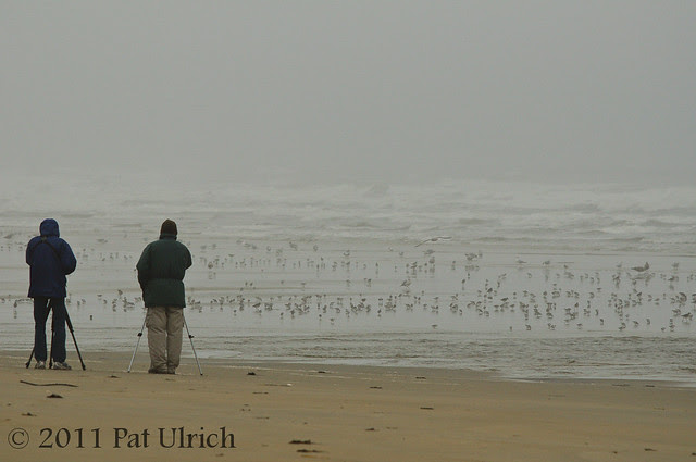 Birders on a dreary morning