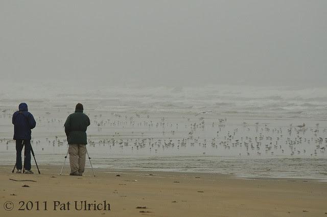 Birders on a dreary morning