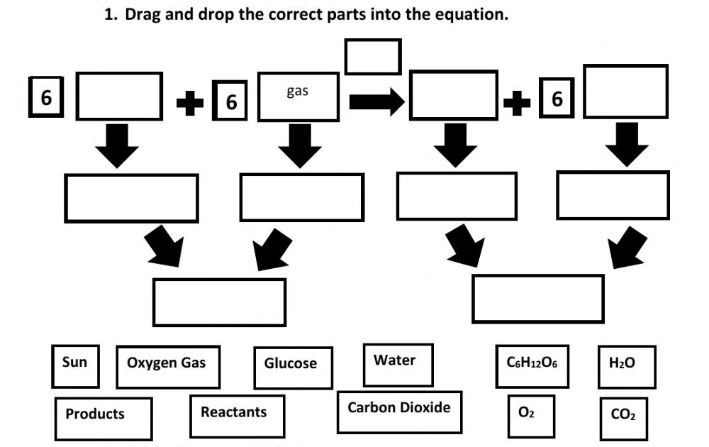 [View 20+] View Photosynthesis Worksheet Answer Key Png vector