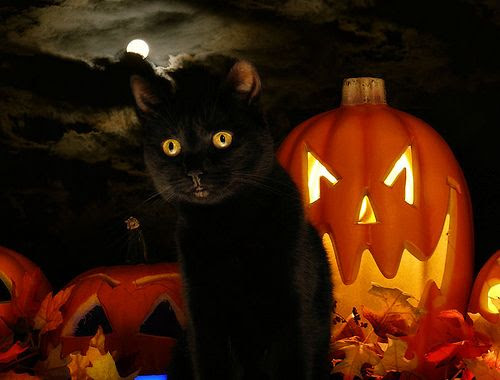 When black cats prowl and pumpkins gleam...