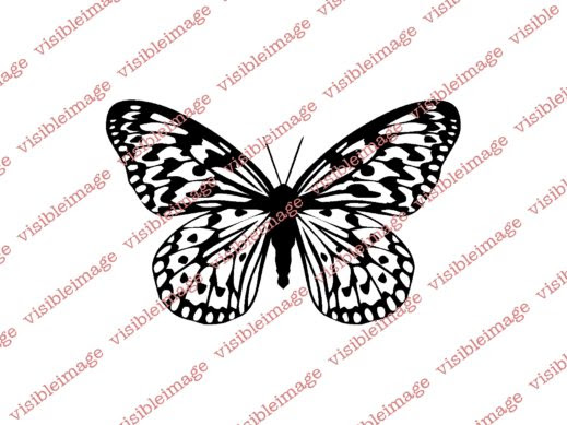 0 Visible Image Butterfly stamp