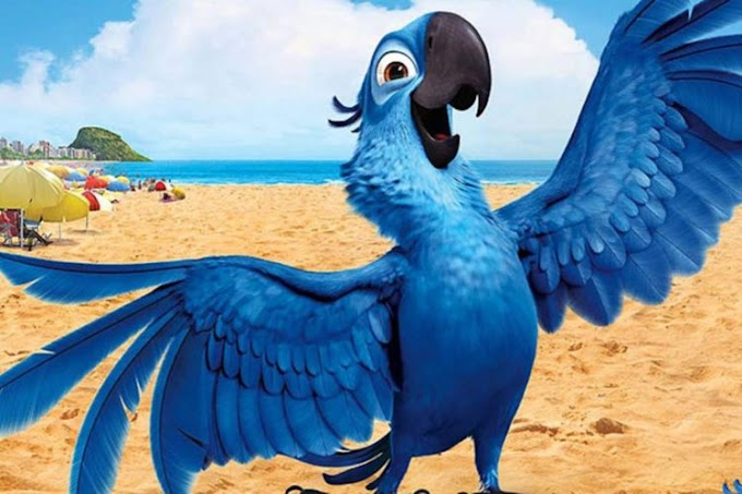 Nace un nuevo bebé de guacamayo azul lejos de la maldad del hombre y se salva de la extinción