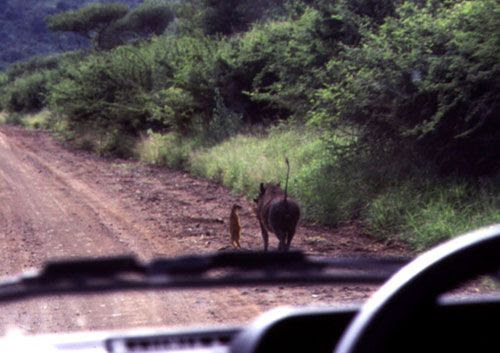 Timon and Pumbaa are real.