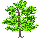 pohon hijau tanaman gambar vektor gratis  pixabay