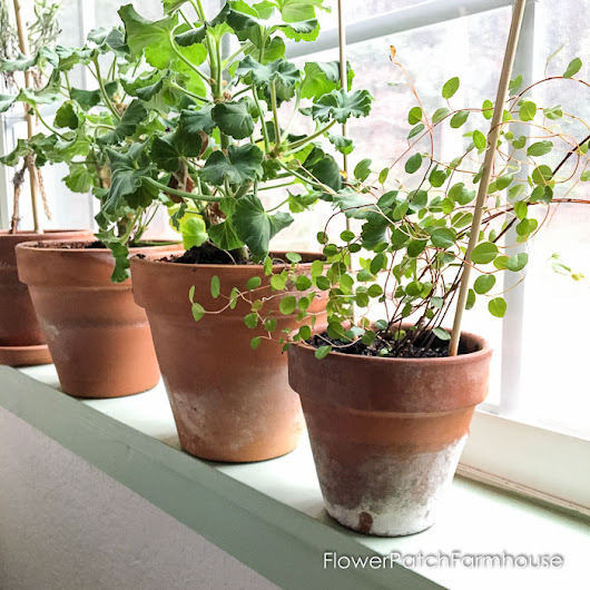 Why I Love Terra Cotta Pots - Flower Patch Farmhouse