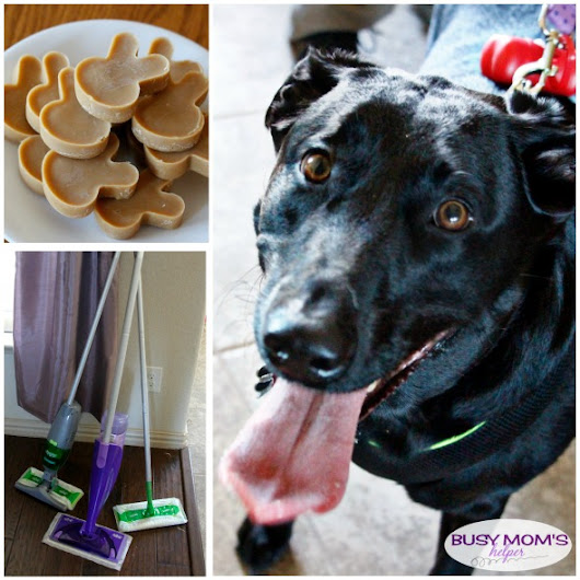 Including Pets in Your New Years Resolutions - Busy Moms Helper