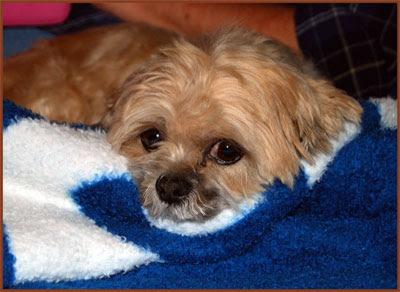 Fuzzy-Blanket