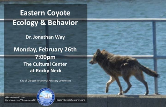 Eastern Coyote (Coywolf) Ecology & Behavior Talk Tonight 7:00PM