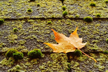 Protecting and Maintaining Asphalt Roofing Systems From Algae and Moss Growth | DoItYourself.com